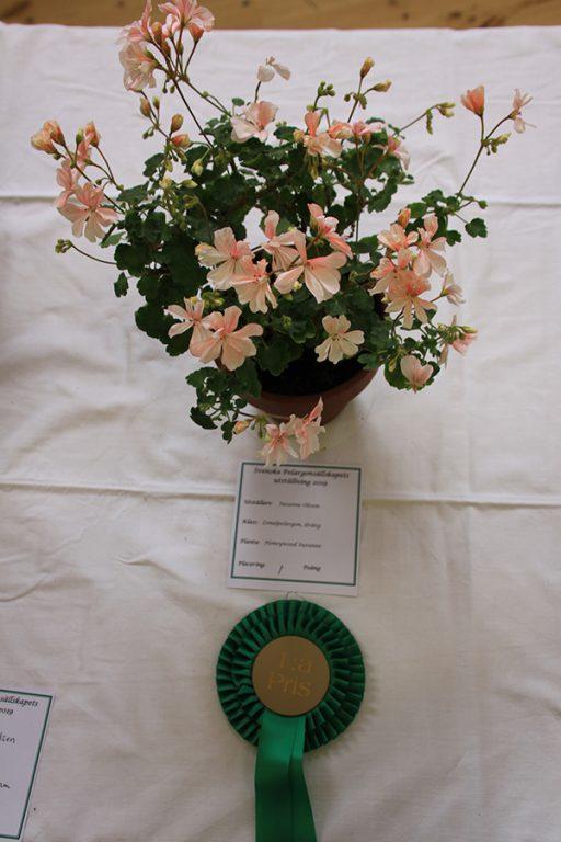 1:a pris, Zonalpelargon dvärg, Honeywood. Suzanne Susanne Olsson