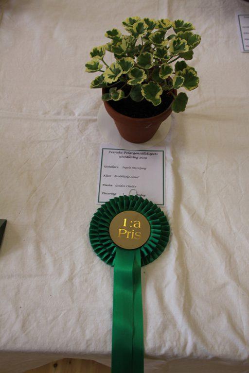 1:a pris, Zonalpelargon brokbladig i två färger, Golden Chalice. Ingela Otterljung